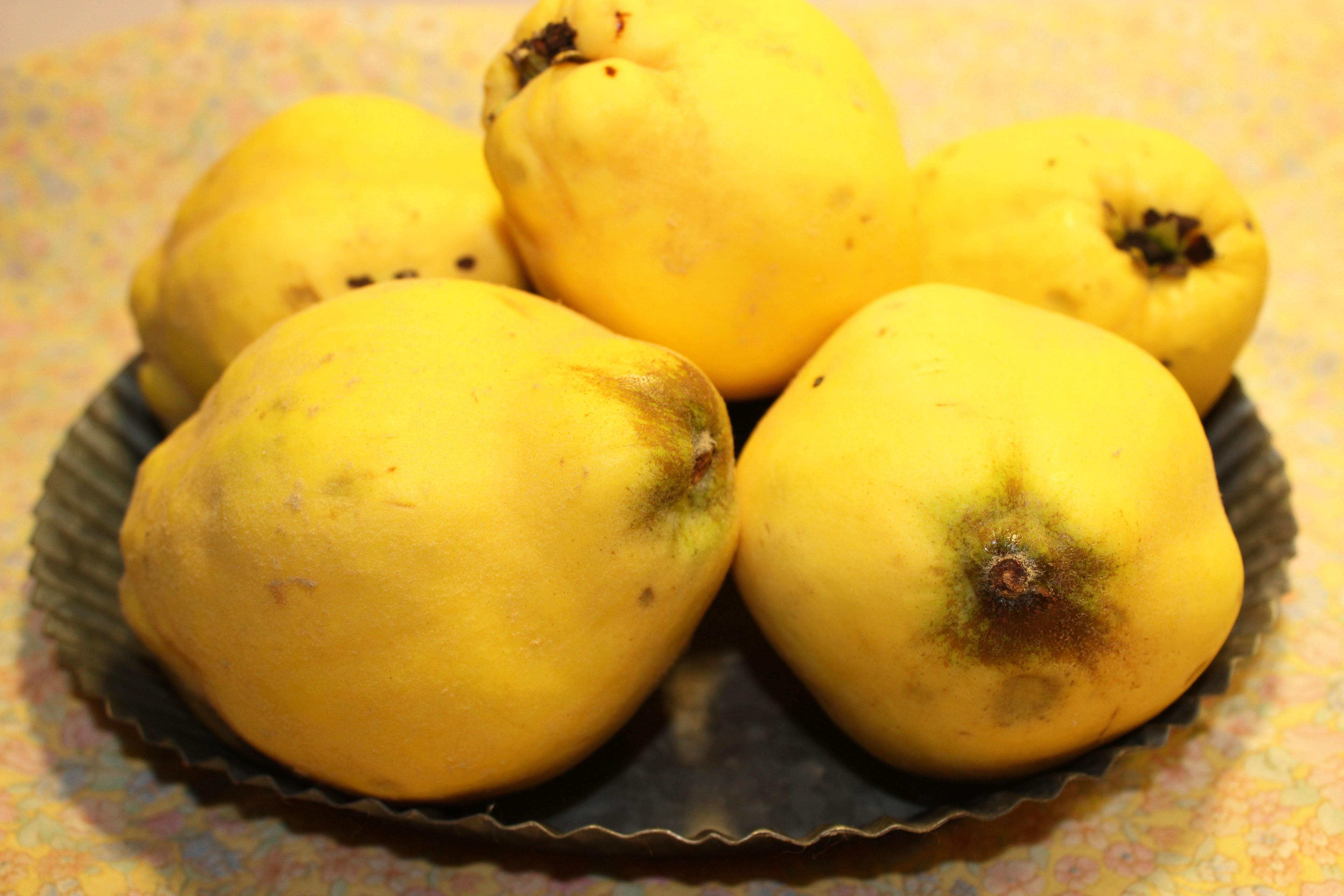 Apfel-Quitten-Torte_4586_1