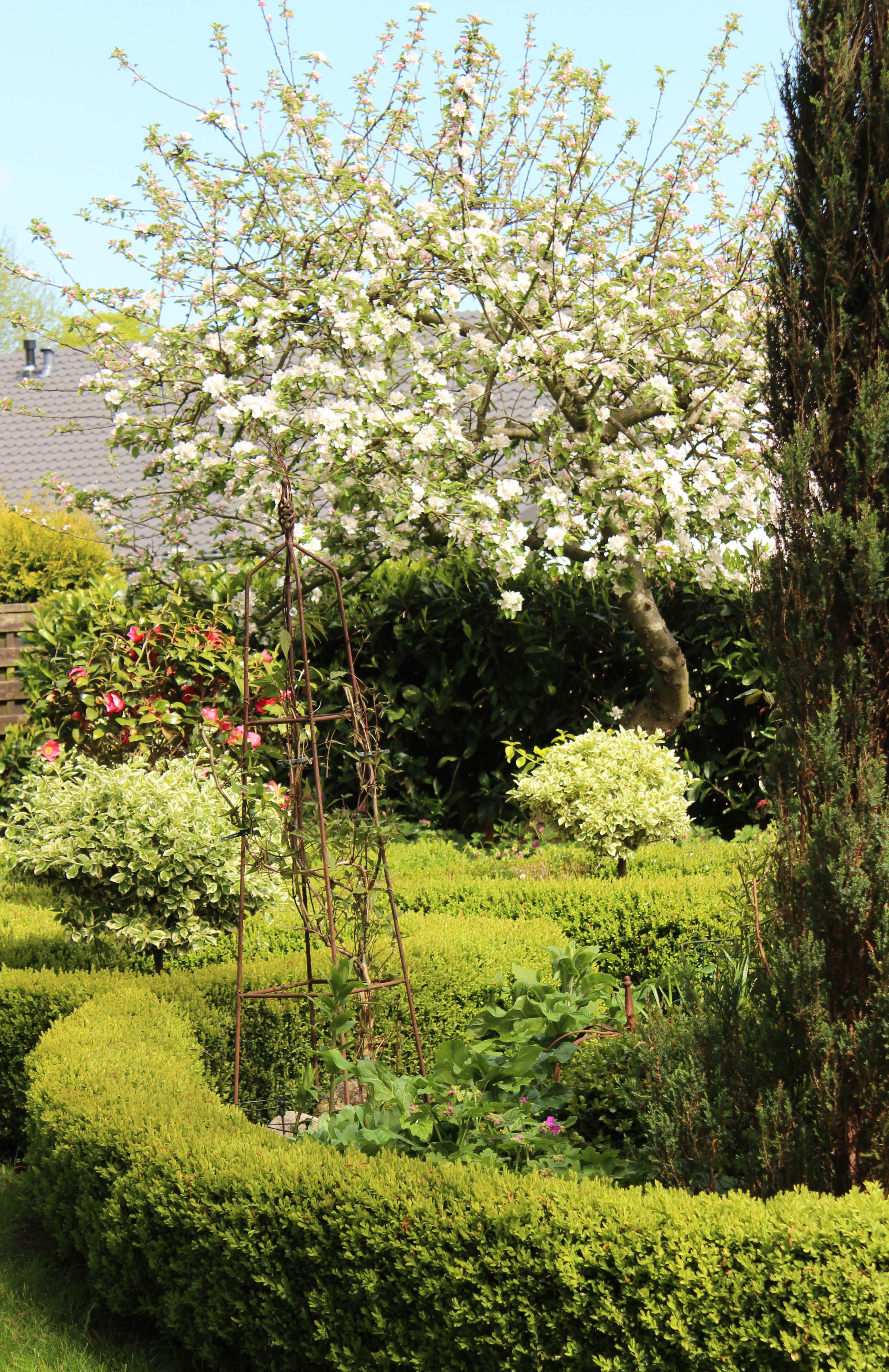 Garten_1115_1